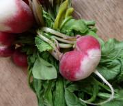 Espuma de petits pois et mouillettes de radis roses
