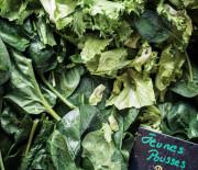 Salade de jeunes pousses aux lamelles de chavignol
